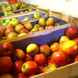 les-pommes-des-vergers-dhardevilles