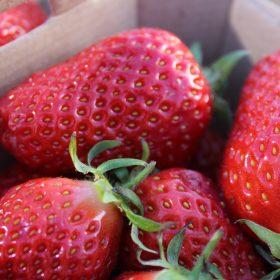 fraises-2