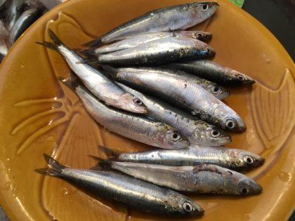 la-boi%cc%82tes-a-sardines-et-les-sardines