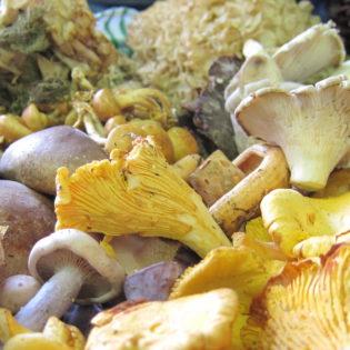 champignons-regis-marcon
