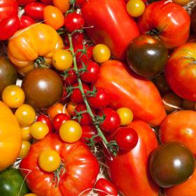 Tomates crédits Bruno Tocaben